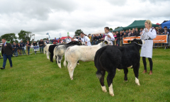 tullamore-show-11-th-aug-2019-033