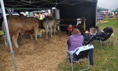 tullamore-show-2018-12-th-aug-020-large-