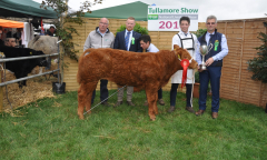 tullamore-show-2018-12-th-aug-079-large-