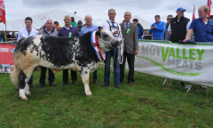 tullamore-show-2018-12-th-aug-084-large-