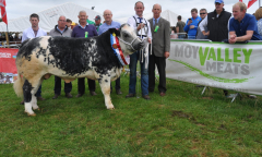 tullamore-show-2018-12-th-aug-086-large-