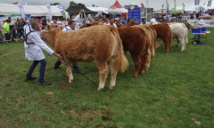 tullamore-show-2018-12-th-aug-136-large--1