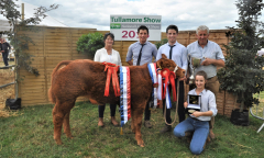 tullamore-show-2018-12-th-aug-264-large-