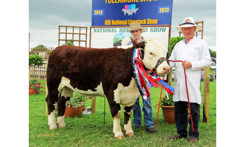 1.supreme-hereford-campion-kye-shelia-596-with-patrick-padraig-mcgrath.sponsor-molloy-precast-tullamore.jpg.jpg