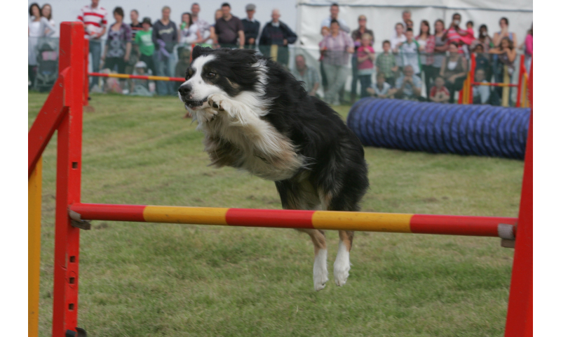 2010-tullamore-show-ger-108