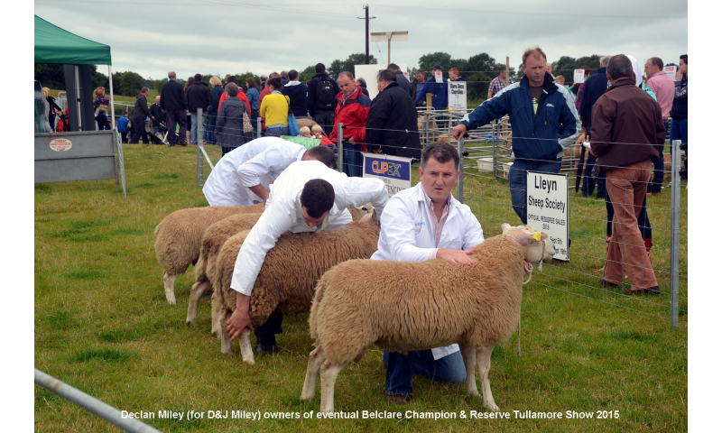 belclare-judging-featuring-declan-miley-owner-of-champion-reserve.jpg