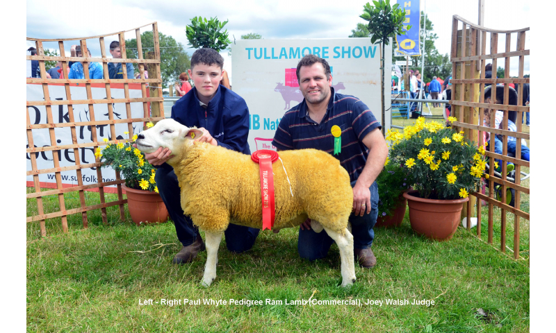 class-346-pedigree-ram-lamb-commercial-winner