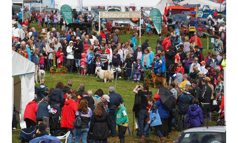 crowd-at-the-dog-section