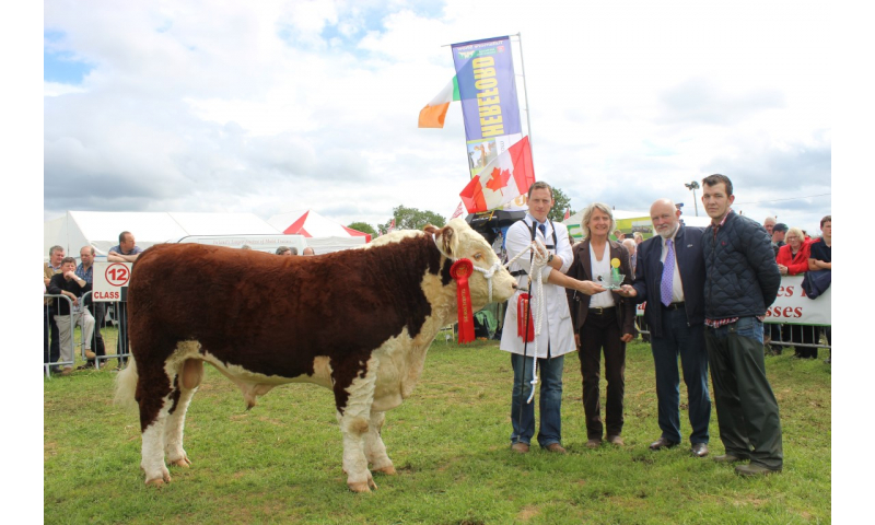national-hereford-bull-winner-tom-anselm-fitzgerald-spon.canadian-bull-congress-pic-c.kinnarney-tullamore-show-2015-673-medium