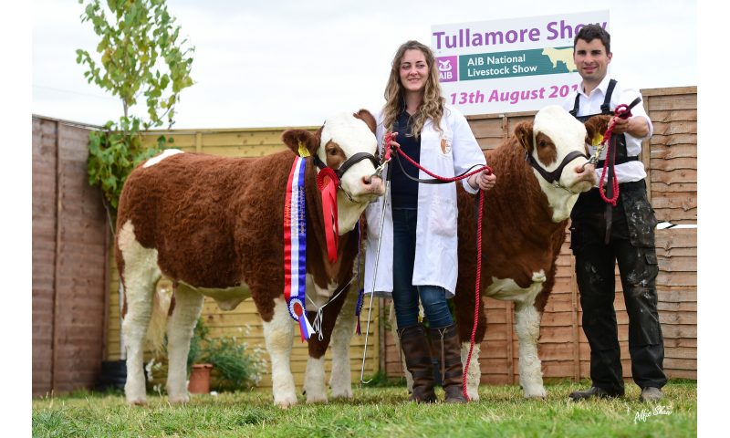 national-junior-progeny-pair-rathnashan-simmentals.jpg