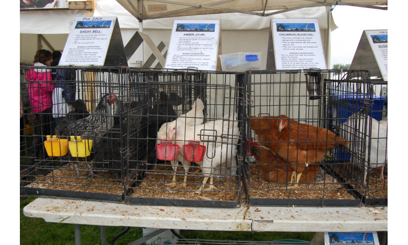poultry-2012-4
