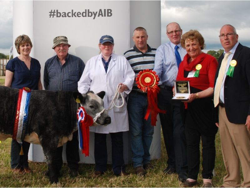 commercial-champion-calf