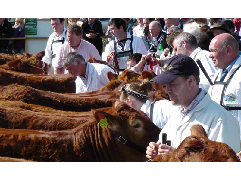 competition-livestock
