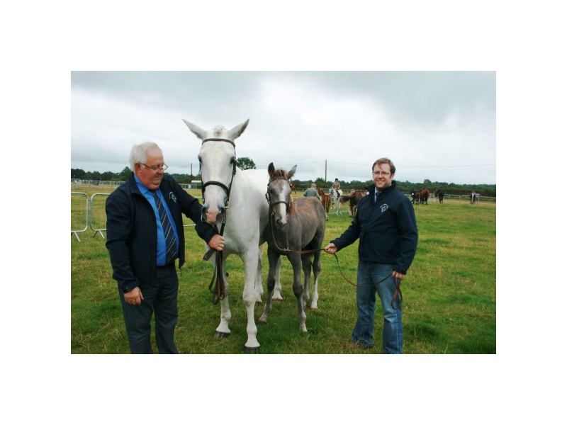 img-4796-horse-with-foal-2-men-at-tullamore-show-bridie-roe