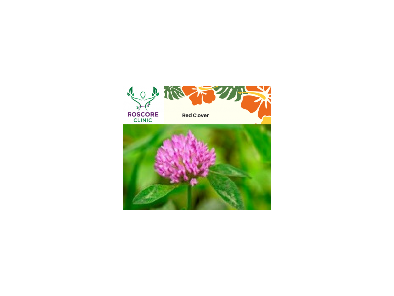 red-clover-300x251