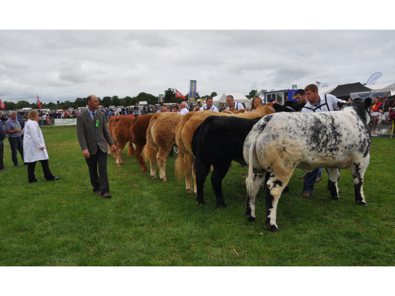 tullamore-show-2018-12-th-aug-102-1