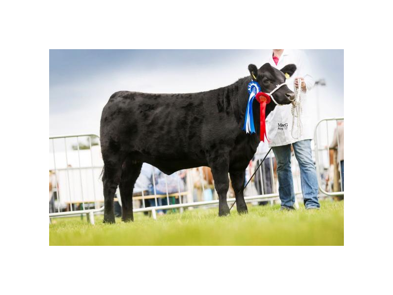 tullamore-show-reserve-champ-junior-female-class-206.jpg