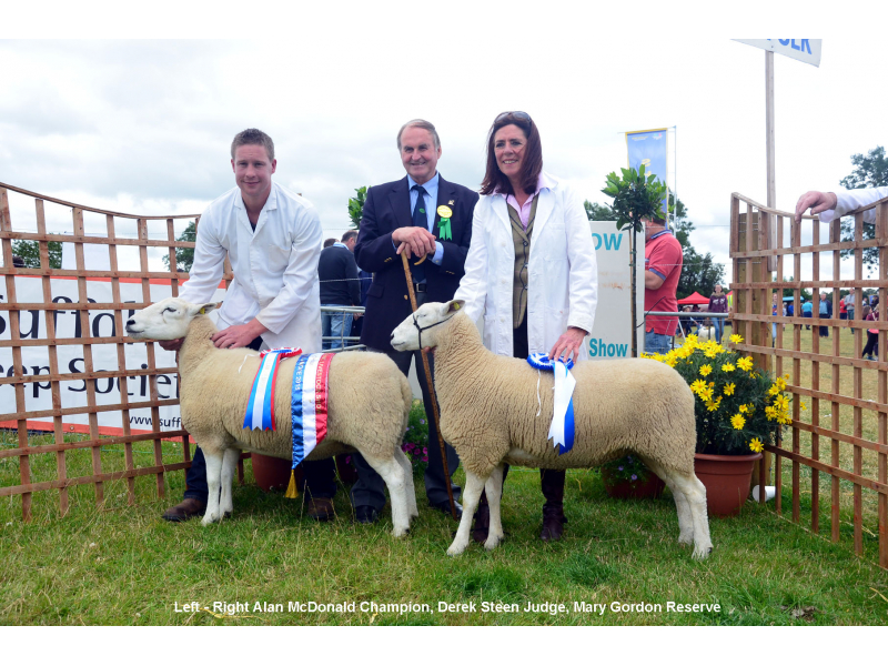 welsh-lleyn-champion-reserve